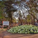 Mali-Sylwii-2015-16-283