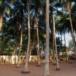 Mali-Sylwii-2015-16-521