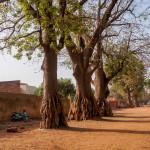 Mali-Sylwii-2015-16-628