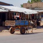 Mali-Sylwii-2015-16-359