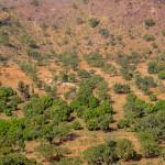 Mali-Sylwii-2015-16-465